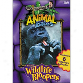 Buck Staghorn Animal Bites Dvd