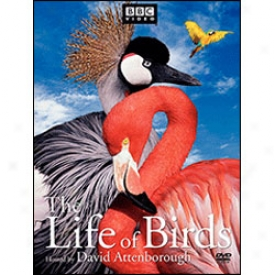 Life Of Birds Dvd