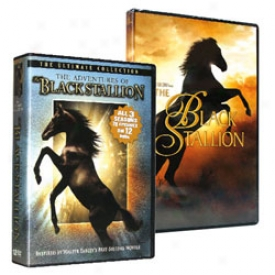 The Black Stallion Collection Dvd