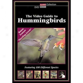 The Video Guide To Hummingbirds Dvd