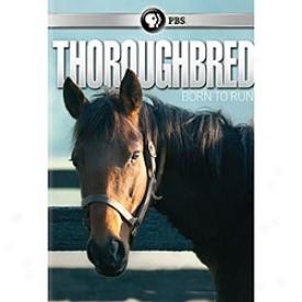 Thoroughbred Born To Run Dvd