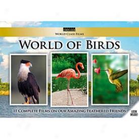 World Of Birds Dvd