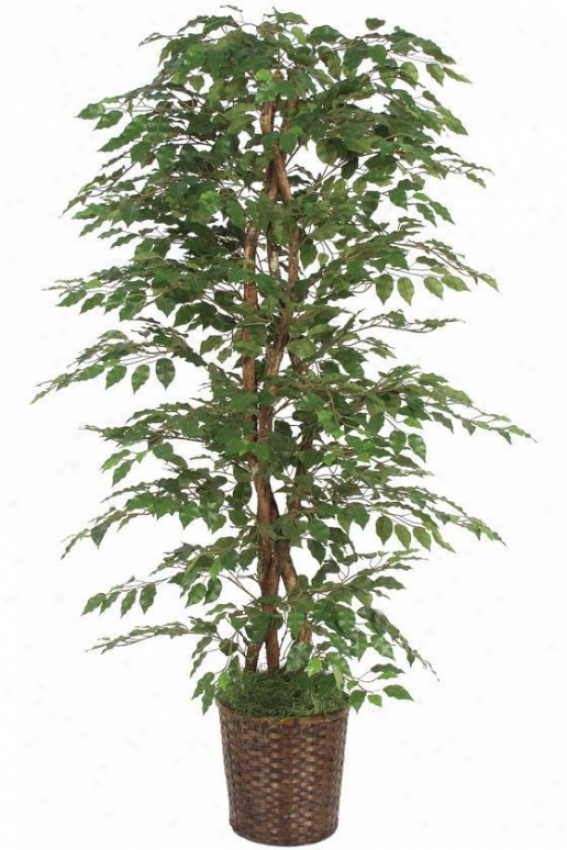 """78""""h Ficus Bush - 78""""hx36""""d, Green"""