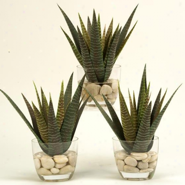 """agave In Glass Dish - Fix Of 3 - 14""""hx12""""w, Green"""