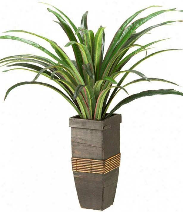 """dracaean In Square Wooden Planter - 24""""hx20""""w, Green"""