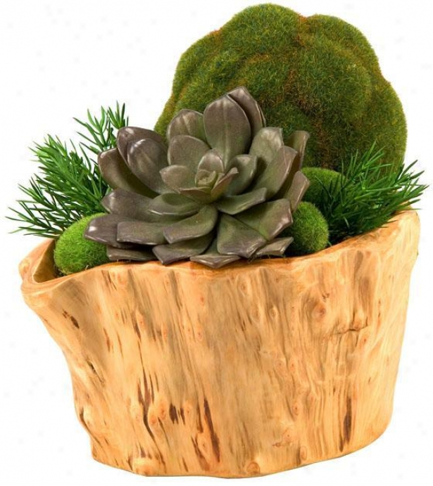 """echeveria And Moss Ball In Wooden Planter - 9""""hx9""""w, Green"""