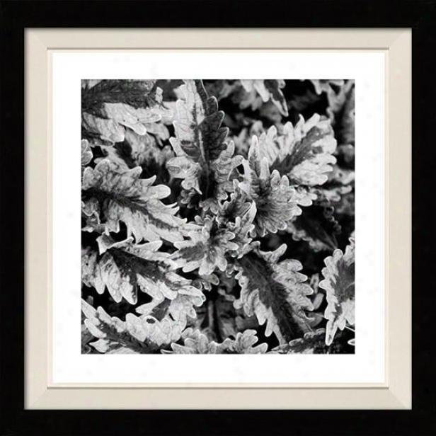 """fern Framed Wall Art - 30""""hx30""""w, Floated Black"""