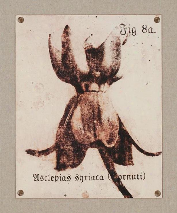 Fig Print Wall Art - Ii, Beige