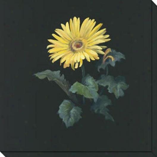 Floral Suite I Canvas Wall Art - I , Black