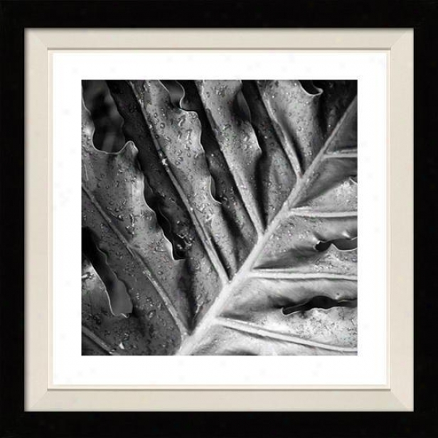 """morning Dew Framed Wall Art - 30""""hx30""""w, Floated Black"""