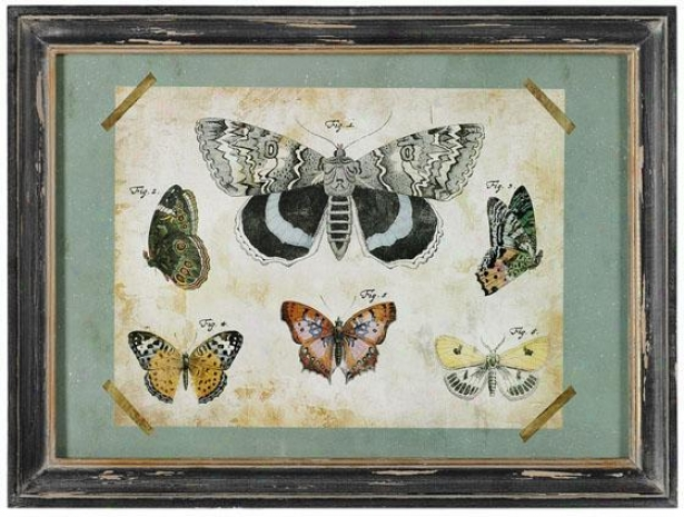 """moth Study Framed Art - 11.5""""hx15.5""""w, Blue"""