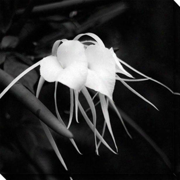 """""""orchid Hearts Canvas Wapl Art - 40""""""""hx40""""""""w, Black"""""""