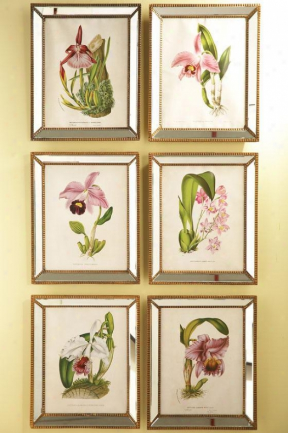Orchidees Orchid Wall Creation of beauty - Set Of 6 - Set Of 6, Free from encumbrances