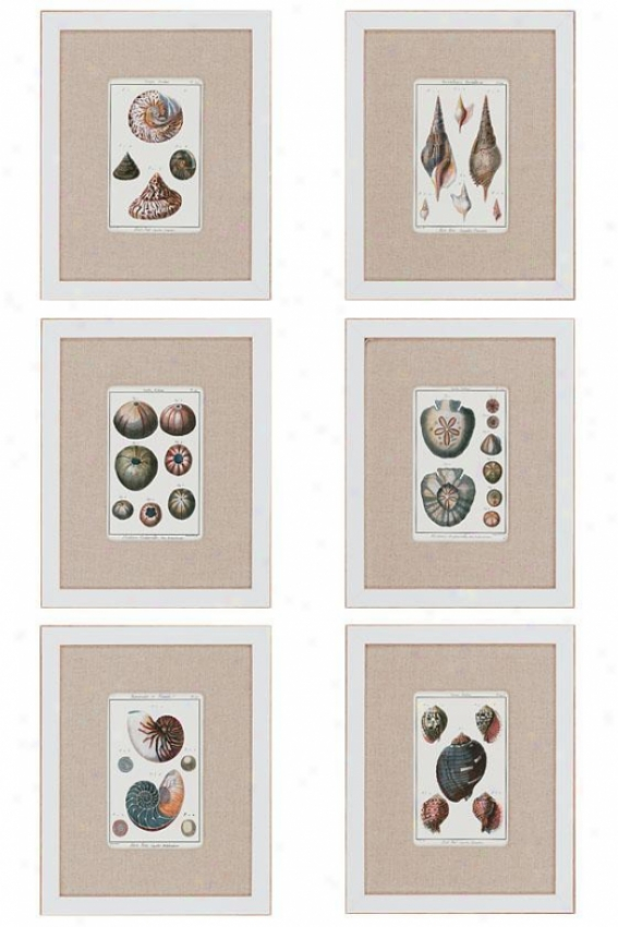 Sea Shells Wall Art - Set Of 6 - Set Of 6, White