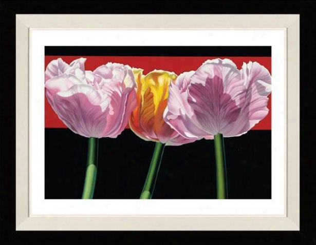 """tulips Framed Wall Art - 28""""hx33""""w, Floated Black"""