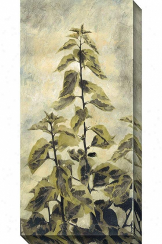 Upward Growth Ii Canvas Wall Art - Ii, White