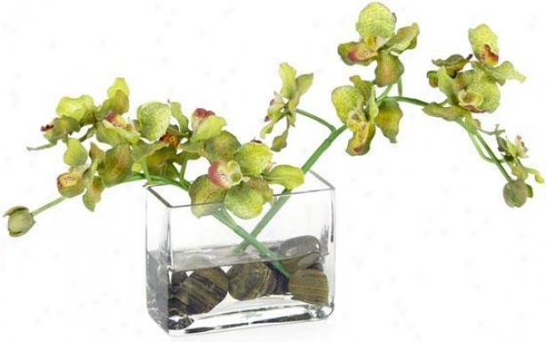 """""""vanda Orchid Floral Arrangement - 8""""""""hx5""""""""w, Green"""""""