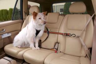 Kurgo Auto Zip Line - Kurgo Dog Seat Belt Harness